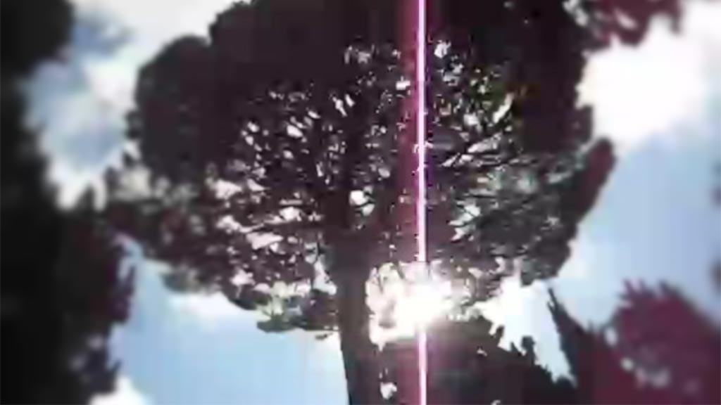Gissa ljudet 1: romerska träd